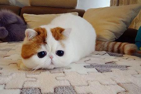 q版动物萌猫手绘图片